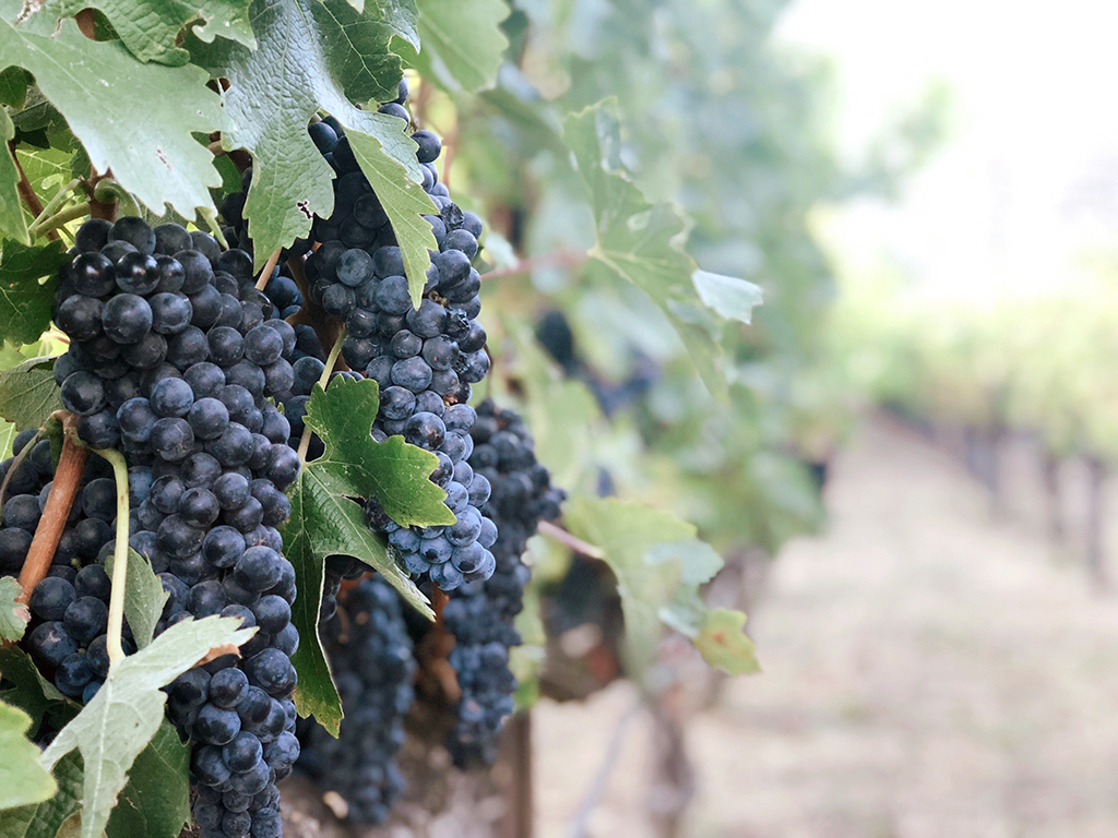 Astreea® and California wineries make the perfect pairing!